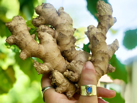 Ginger~ What you need to know about this Earth gift.