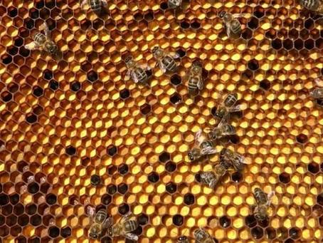 Las abejas y la viña