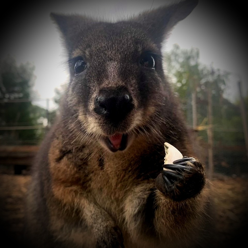 Zoos Victoria, melbourne, victoria, australia, affluent society