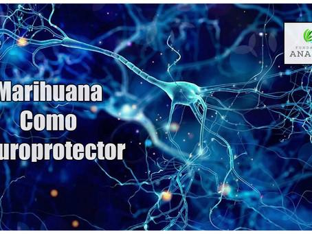 Marihuana Como Neuroprotector