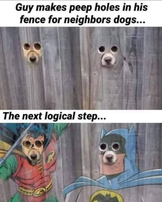 Guy makes peep holes in his fence for his neighbor dogs Meme