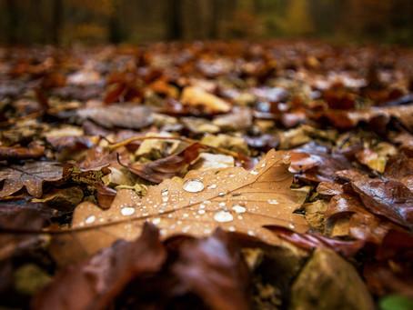 Autumn Lawn Care Checklist