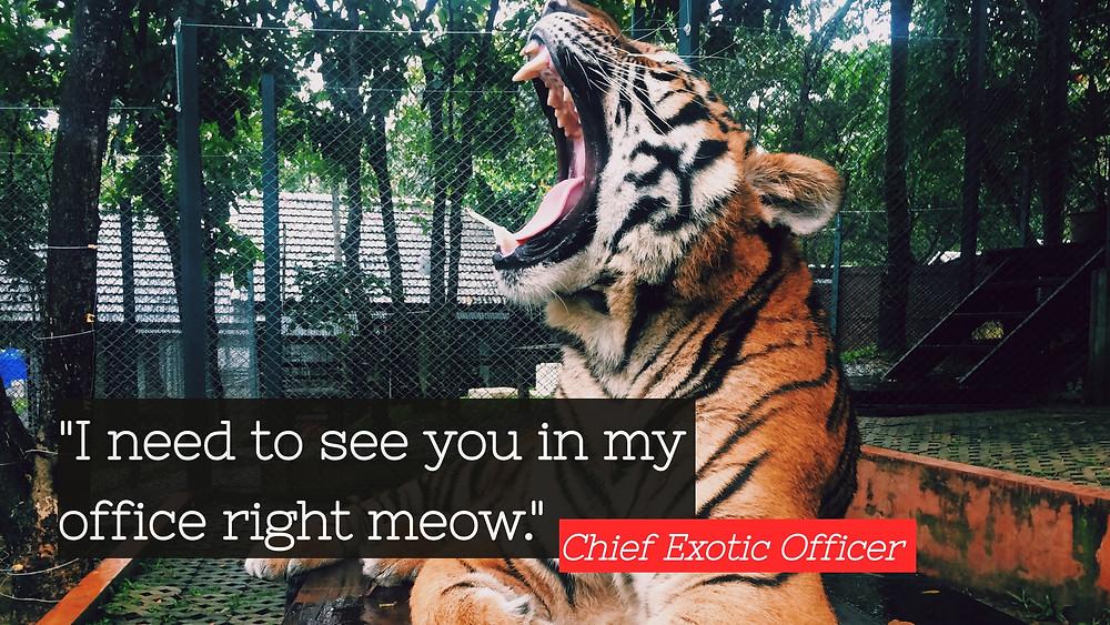 Tiger King meeting.