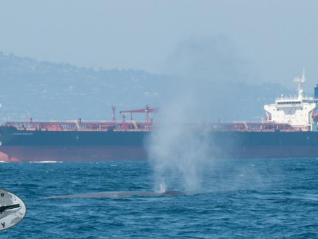 Congresswomen Capps and Brownley Assist GWC Effort to Protect Endangered Blue Whales