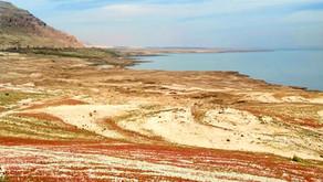 Visit the Dead Sea before it dies!