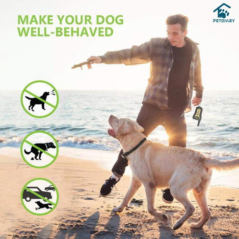 7 Reasons Why Choose E-collar Training for Your Dog