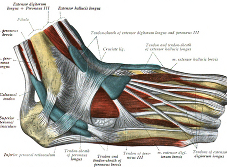 Ankle Injuries - Peroneus Longus Tendinopathy