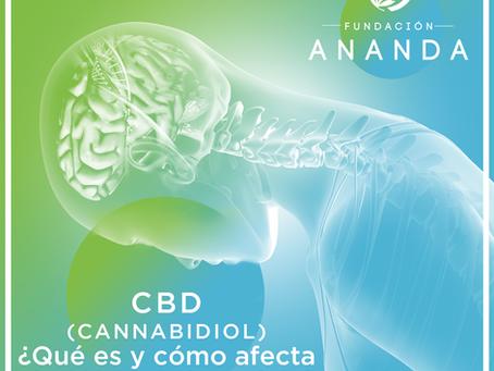 CBD (Cannabidiol): ¿Qué es y cómo afecta al cuerpo y al cerebro?