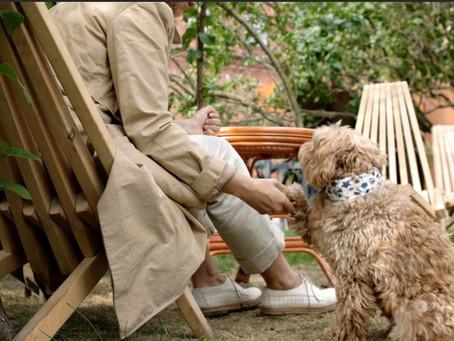 Las Mascotas: un amor incondicional que cura y acompaña