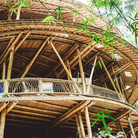Elora Hardy's Bamboo Miracle