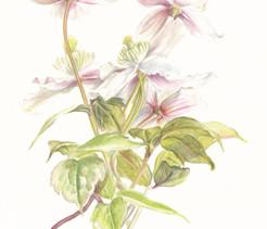 My Botanical Art: Part II