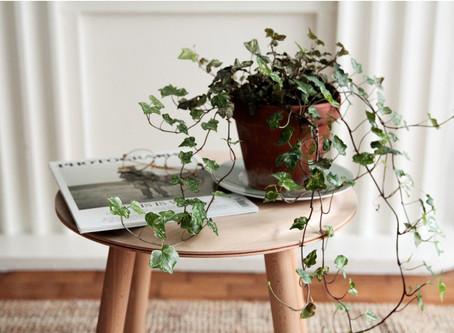 Darum brauchst du Pflanzen in deinem Zuhause!