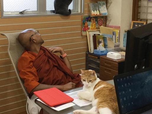 スマナサーラ長老の仏教法話