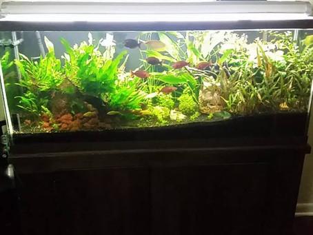 Low-tech planted tanks