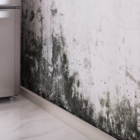 5 Things Not To Overlook When Dealing With Mold In The Home