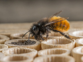 18·12 - Des abeilles si précieuses