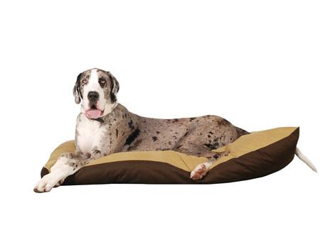 Jaka obroża dla dużego psa będzie najlepsza?