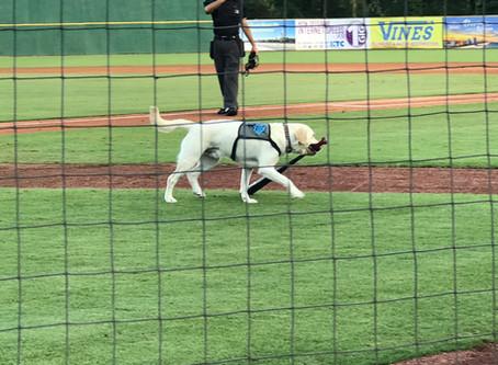 "Pic of the Week: ""Slider,"" the Bat Retrieving Dog"