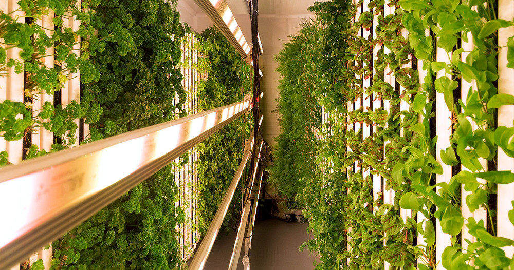 vertical, hydroponic urban farm based in Paddington, London