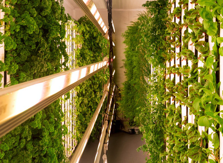 Why we believe vertical, urban farming can help save the planet!