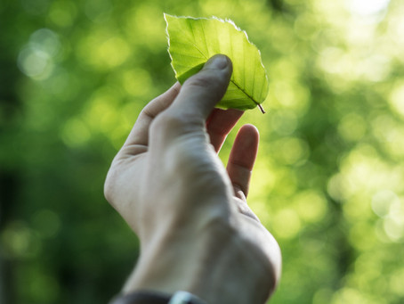 What is Sustainability and Why Should You Care About it?