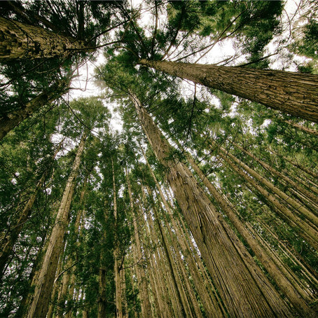 Carbon Sequestration - a step towards protecting the earth