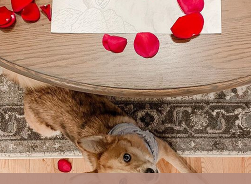 Epic Valentines Gift Guide
