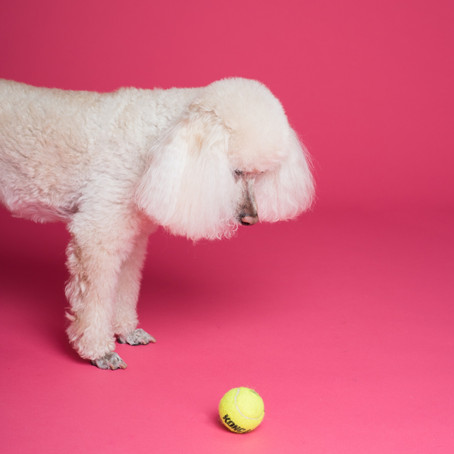 Can you really teach an old dog new tricks?: Helping staff a new innovation lab in an existing org