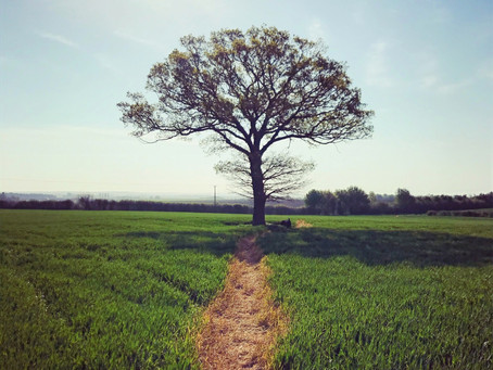Finding a new path - embracing change.