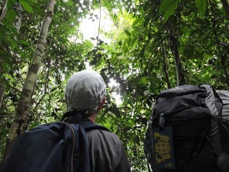 3 hours Orangutan Trek for peoples have short time Holiday or easier trekking