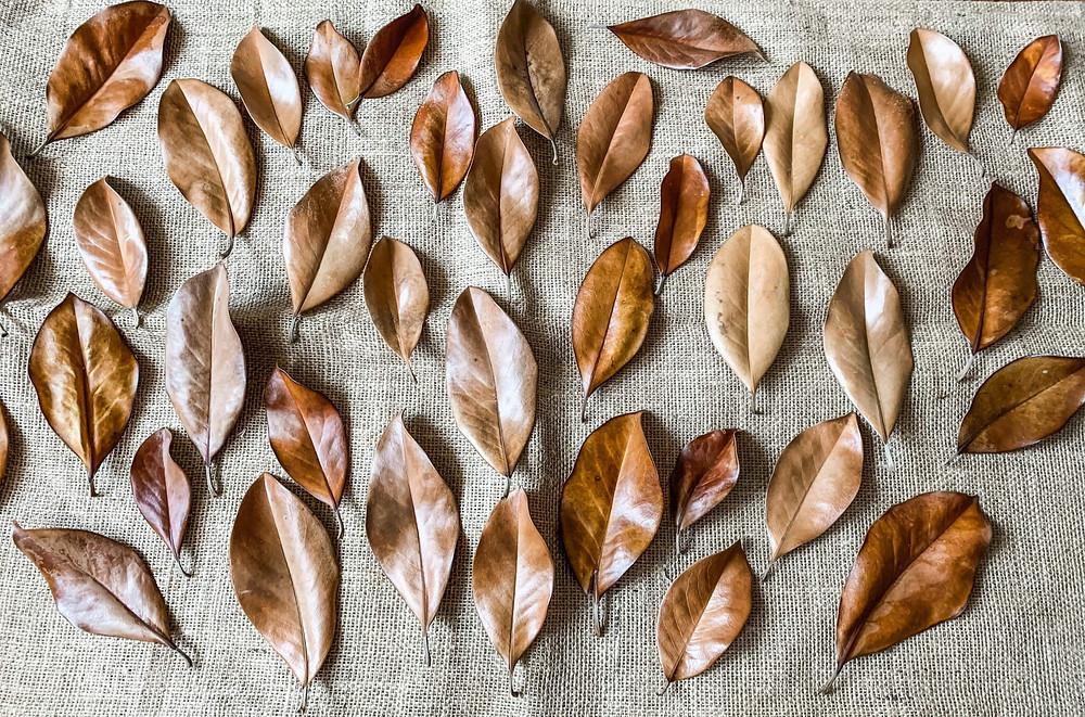 dried magnolia leaves on burlap