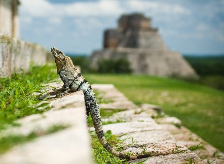 Discovery in Mexico of an Aztec Palace, house of Cortes.