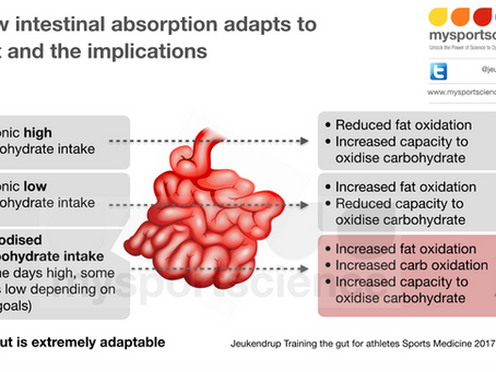 How intestinal absorption adapts to diet and the implications