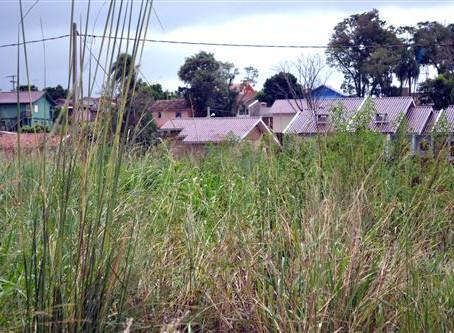 Donos de terrenos ou lotes devem providenciar roçada