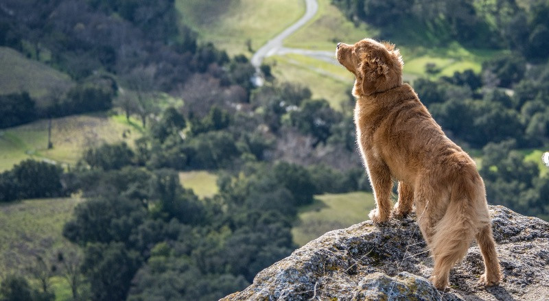 Dog on holiday up a mountain