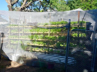 My First Encounter with Hydroponics in South Africa