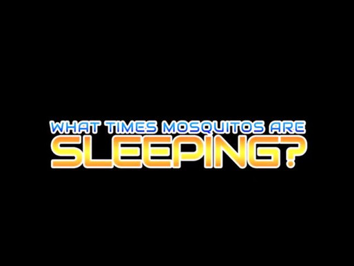 What Times Mosquitos Are Sleeping? short film review