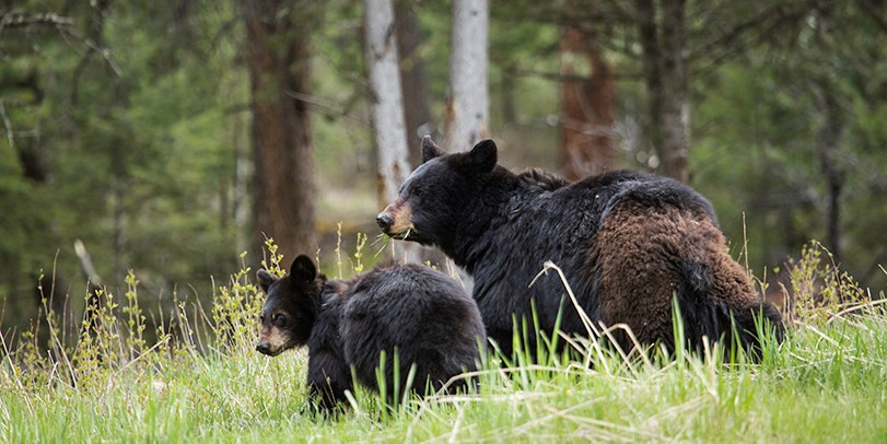 Theodore Roosevelt Wouldn't Have Okayed Shooting Cubs & Pups In Their Dens