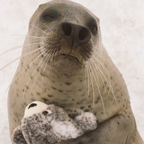 Seal Can't Stop Hugging Toy Version Of Itself - Cuteness Overload