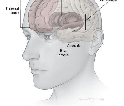 The Biochemistry of Depression