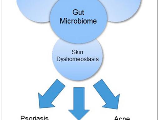 Eje Intestino – Piel (parte 2): Una solución natural para tu piel puede estar en el intestino