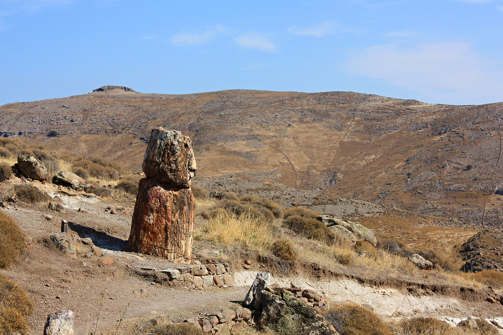 Petrified Forest Lesvos Greece