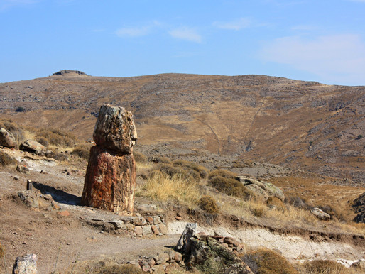 Petrified Forest of Lesbos | Protected Natural Monument
