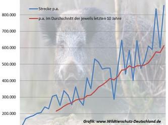 Arme Sau – Tierschutz wird bei der Wildschweinjagd grob vernachlässigt