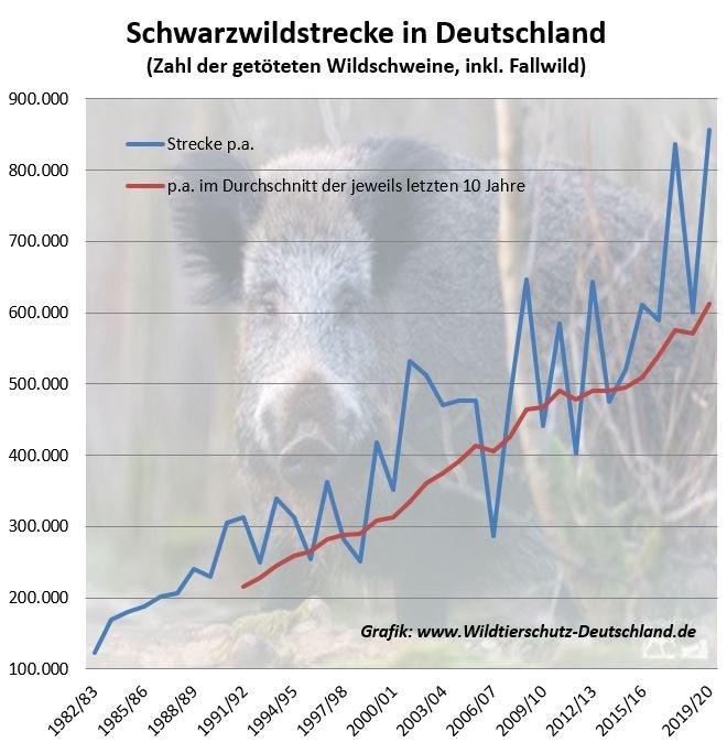 Zahl getötete Wildschweine Jagdstatistik Strecke Schwarzwild