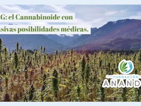 CBG: el Cannabinoide con masivas posibilidades médicas.