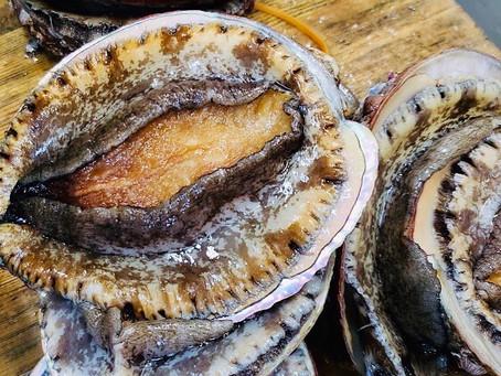 夏休みはアルベロネロでバカンスを♪【鮑!トリュフ!】2大食材のSpecialメニュー&イタリアワインの宴