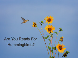 Are You Ready For Hummingbirds?
