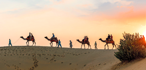 Herd of Camels with tourists for desert safari in jaisalmer