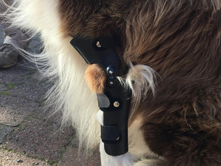 Een Elleboogbrace voor mijn hond ?